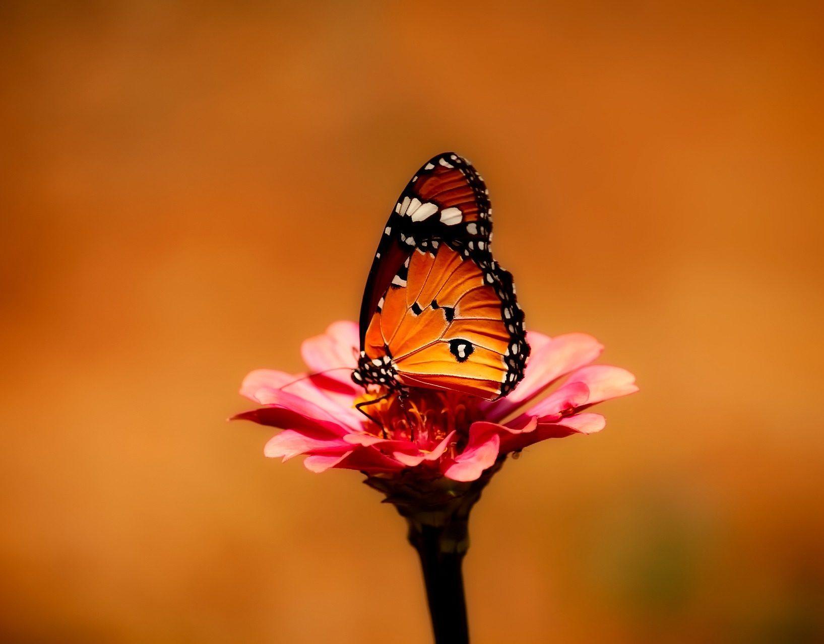 Oranje vlinder bloem